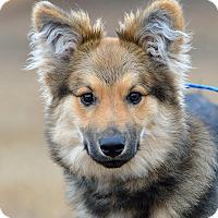 Adopt A Pet :: Dudley - Dacula, GA