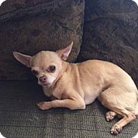Adopt A Pet :: NELLIE - Rancho Cucamonga, CA