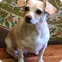 Adopt A Pet :: Missy - Bend, OR