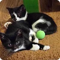 Adopt A Pet :: Betty Boop & Bonnie Bell - Williamsburg, VA