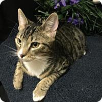 Adopt A Pet :: Sage - Fayetteville, GA