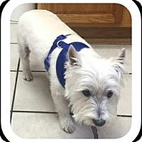 Adopt A Pet :: WESLEY - Carrollton, TX