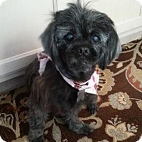 Adopt A Pet :: Holly - Manhattan Beach, CA