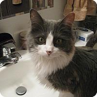 Adopt A Pet :: Josie - Loveland, CO