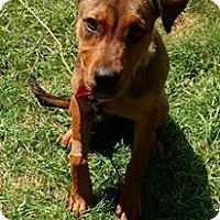 Adopt A Pet :: Ruby - Elyria, OH