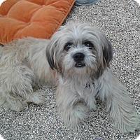 Adopt A Pet :: Brewsky - Thousand Oaks, CA
