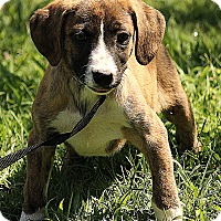 Adopt A Pet :: Brooklyn - Spring Valley, NY