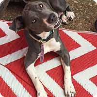 Adopt A Pet :: DELTA - HARRISBURG, PA