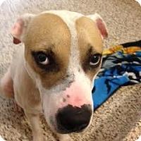 Adopt A Pet :: Waylon - Aiken, SC