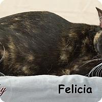 Adopt A Pet :: Felicia - Oklahoma City, OK