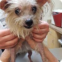 Adopt A Pet :: Clarice - St John, IN