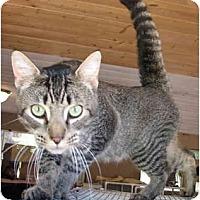 Adopt A Pet :: Tiernan - Davis, CA