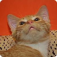 Adopt A Pet :: BENNETT - SILVER SPRING, MD