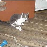 Adopt A Pet :: Frankie - Clay, NY