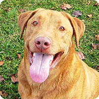 Adopt A Pet :: Rusty - baltimore, MD