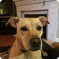 Adopt A Pet :: Bonnie - Phoenxville, PA