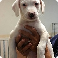Adopt A Pet :: David ~ Adoption Pending - Youngstown, OH