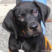 Adopt A Pet :: Brutus - Bedford, VA