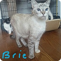 Adopt A Pet :: Brie - McDonough, GA