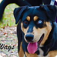 Adopt A Pet :: Wags - Daleville, AL