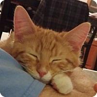 Adopt A Pet :: Fanta - Horsham, PA