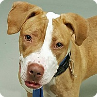Adopt A Pet :: Alex Tribek - Troy, MI
