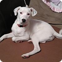 Adopt A Pet :: Adam - Hanover, PA