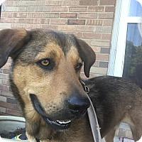 Adopt A Pet :: Tim - Manhasset, NY