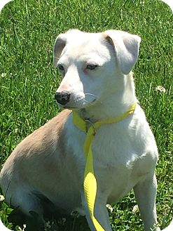 Terrier (Unknown Type, Small) Mix Dog for adoption in Gallatin, Tennessee - Zoe