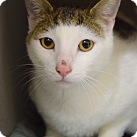 Adopt A Pet :: Mickey - Dublin, CA