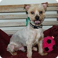 Adopt A Pet :: Winnie - Lawrenceville, GA