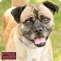 Adopt A Pet :: Dawson - Marina del Rey, CA