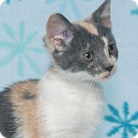 Adopt A Pet :: July-B1 - Elmwood Park, NJ