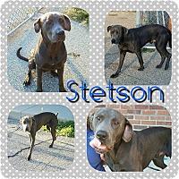 Adopt A Pet :: Stetson - Garden City, MI