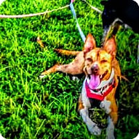 Adopt A Pet :: Neya - Miami, FL