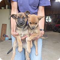 Adopt A Pet :: Yetti & Yesterday - Memphis, MI