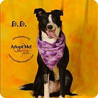 Adopt A Pet :: D.D. - Topeka, KS
