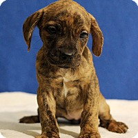 Adopt A Pet :: Everest - Waldorf, MD