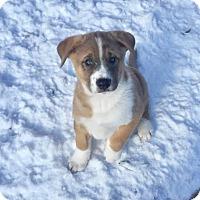 Adopt A Pet :: Reindeer Babies: Comet - Doylestown, PA