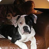 Adopt A Pet :: Kelsey - Apex, NC