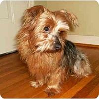 Adopt A Pet :: Trace - Mooy, AL