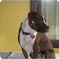 Adopt A Pet :: Faith - Hoffman Estates, IL