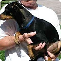 Adopt A Pet :: Murphy - Kingwood, TX