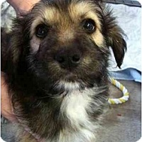Adopt A Pet :: Ranger - Arlington, TX