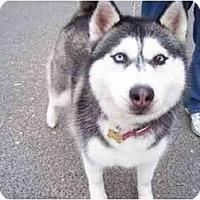 Adopt A Pet :: Marina - Belleville, MI