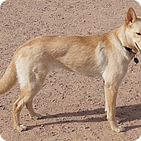 Adopt A Pet :: STAR - Apache Junction, AZ