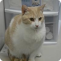 Adopt A Pet :: Tripoly - Chesapeake, VA