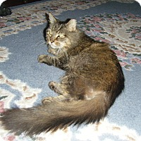 Adopt A Pet :: Sylvia - Horsham, PA
