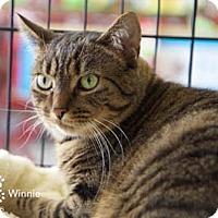 Adopt A Pet :: Winnie - Merrifield, VA