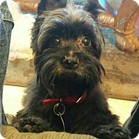 Adopt A Pet :: Max - Conroe, TX